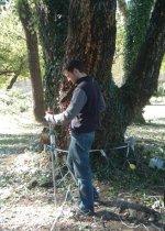 Monitoraggio controllo verifica alberi albero 150