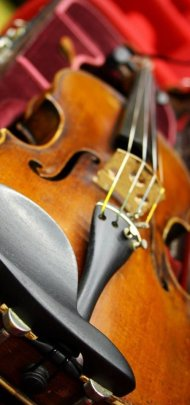Agimus violino