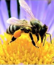 """""""L'ape in città"""" - anno 2019"""