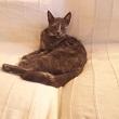 Gatto Giacomina