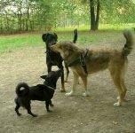 Area verde attrezzata per cani