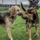 Appuntamenti per i proprietari di animali 2019/2020 cani