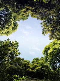 Giornata nazionale degli alberi 2020