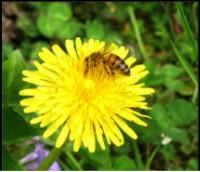 """""""Api in città. Nettari, api e miele"""" - anno 2018"""
