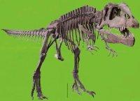 Logo locandina mostra Dinosauri