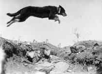 """Mostra """"Gli animali della Grande Guerra"""""""