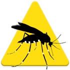 App Mosquito Alert 140