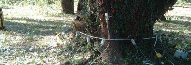 Monitoraggio controllo alberi albero 380 ant