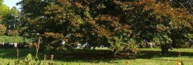 Faggio cavalcavia Borgomagno Territorio quartiere 2 parchi verde alberi albero 380 ant