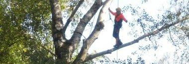 Interventi climbing intervento alberi albero 380 ant