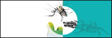 Mostra Preziosa Young 2019 contemporary jewellery 380 ant