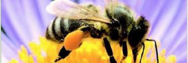 """""""L'ape in città"""" - anno 2019 380 ant"""