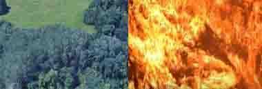 Incendi boschivi incendio bosco fuoco urbanistica 380 ant