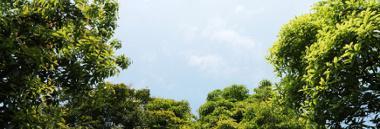 Giornata nazionale degli alberi 2020 380 ant