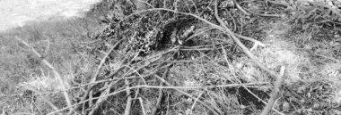 Ramaglie rami sterpaglie 380 ant