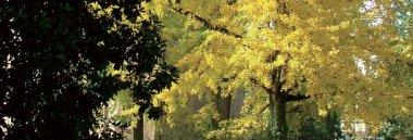 Giornata dell'albero alberi albero 380 ant